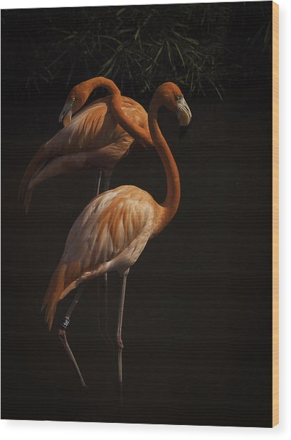 Flamingo Delight Wood Print