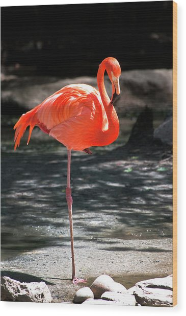 Flamingo Wood Print by Martin Nunez