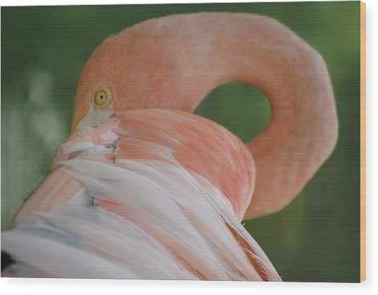 Flamingo Wood Print by Melanie Beasley