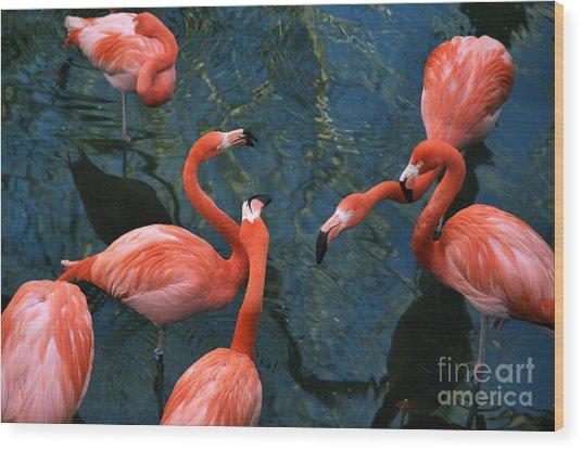 Flamingo Party 1 Wood Print
