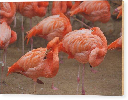 Flamingo Party Wood Print by Teresa Blanton