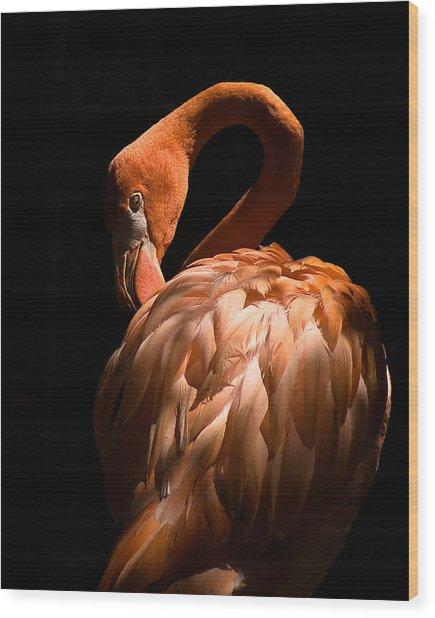 Flamingo Wood Print by Patrick  Flynn