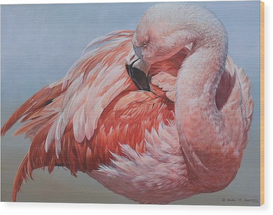 Flamingo Preening Wood Print