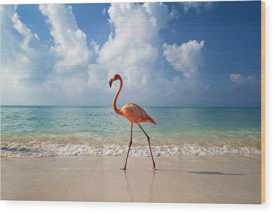 Flamingo Walking Along Beach Wood Print