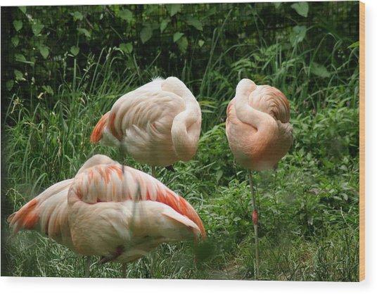 Flamingo's At Rest Wood Print by ShadowWalker RavenEyes Dibler