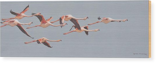 Flamingos In Flight Wood Print