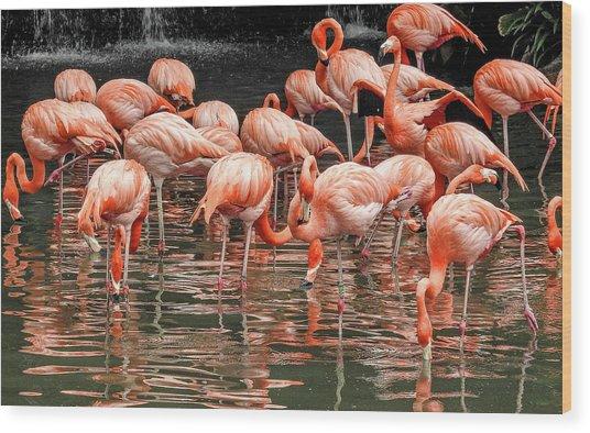 Flamingo Looking For Food Wood Print