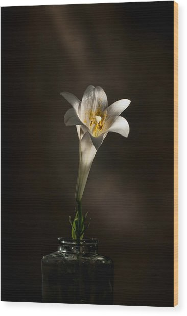 Flashlight Series Easter Lily 1 Wood Print