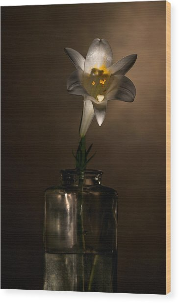 Flashlight Series Easter Lily 2 Wood Print
