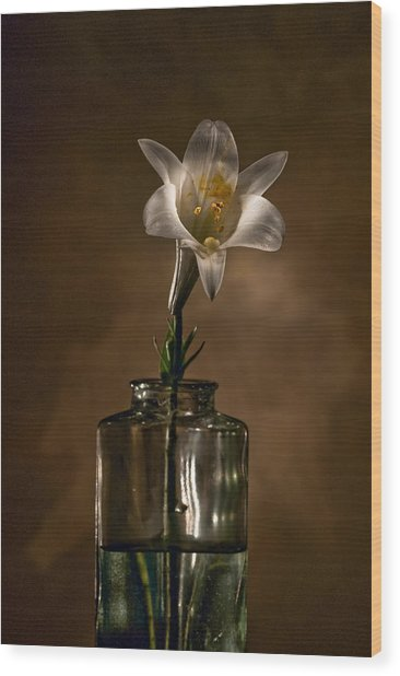 Flashlight Series Easter Lily 3 Wood Print
