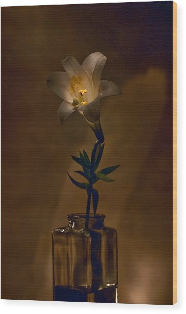 Flashlight Series Easter Lily 4 Wood Print