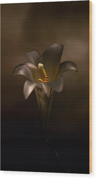 Flashlight Series Easter Lily 6 Wood Print