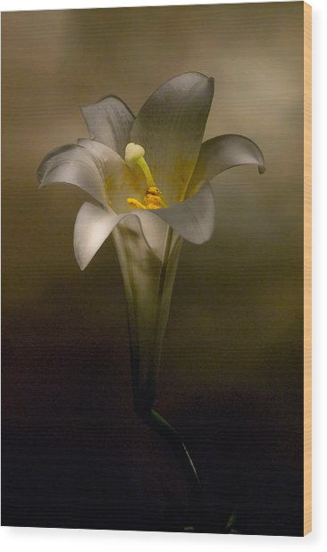 Flashlight Series Easter Lily 7 Wood Print