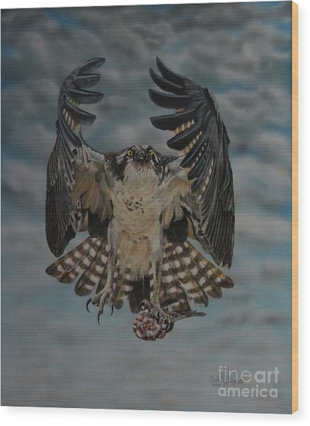 Fleck The Osprey  Wood Print