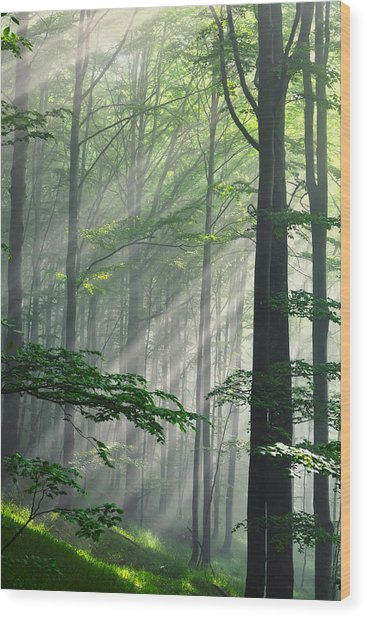 Fleeting Beams Wood Print