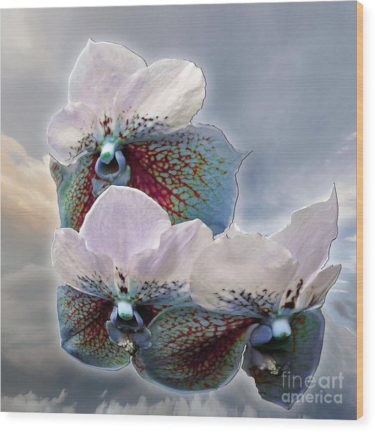 Fleur De Celeste Wood Print
