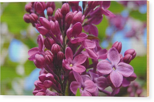 Fleur De Lilac Wood Print