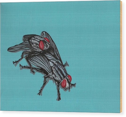 Flies Wood Print
