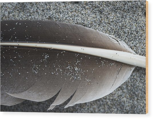 Flight Feather Wood Print