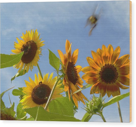 Flight Of The Bubble Bee Wood Print by Julie Geiss