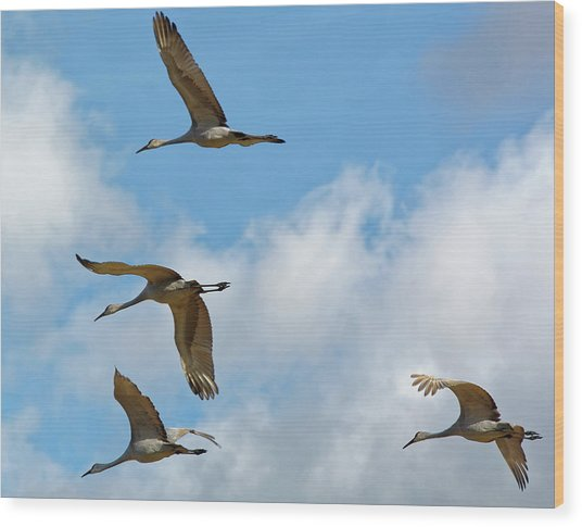 Flight Of The Cranes Wood Print