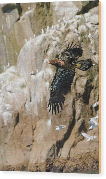 Flight Of The Intruder Wood Print by Emily Bristor