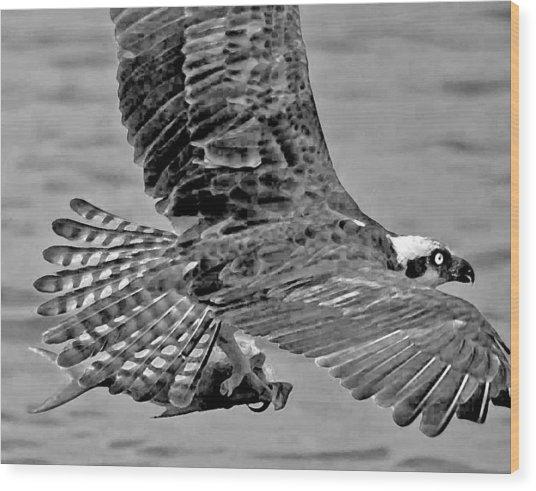 Flight Of The Osprey Bw Wood Print
