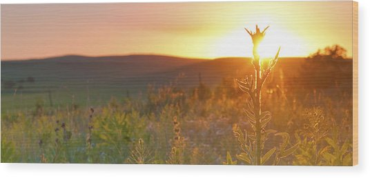 Flint Hills Sunset Wood Print