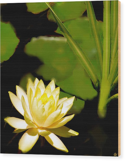 Float Of Elegance  Wood Print