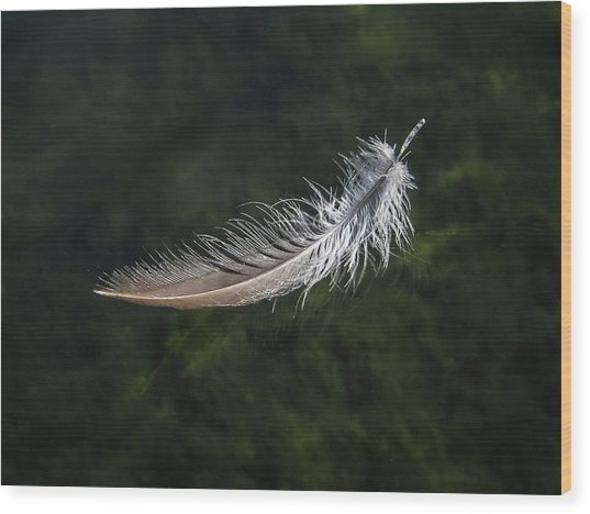 Floating Feather Wood Print