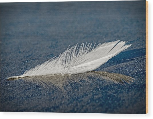 Floating Feather Reflection Wood Print