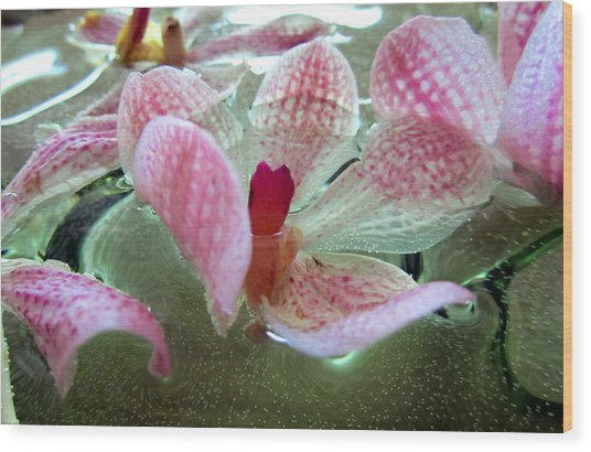 Floating Orchids Wood Print by Nicole I Hamilton