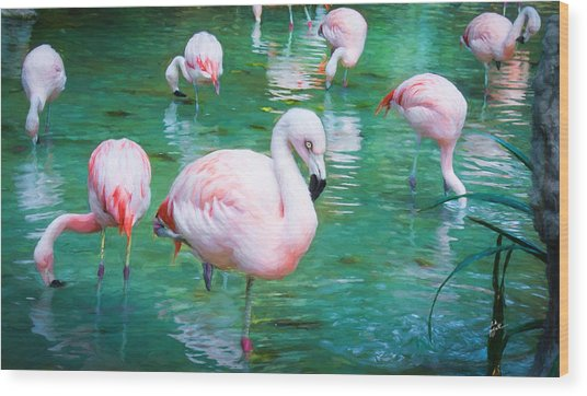 Flock Of Flamingos Wood Print