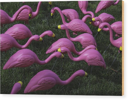 Flock Of  Plastic Flamingos Wood Print