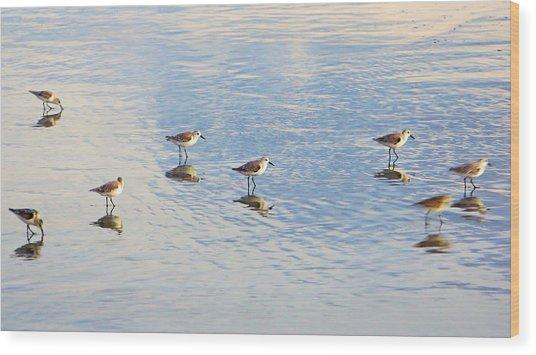Flock Of Sanderlings Wood Print