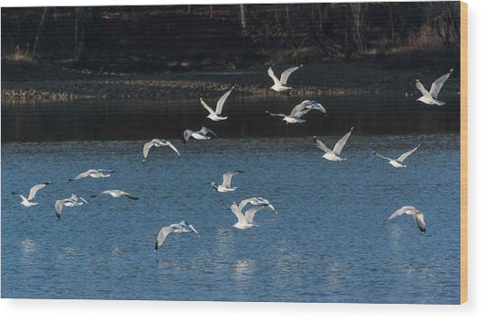 Flock Of Them Wood Print