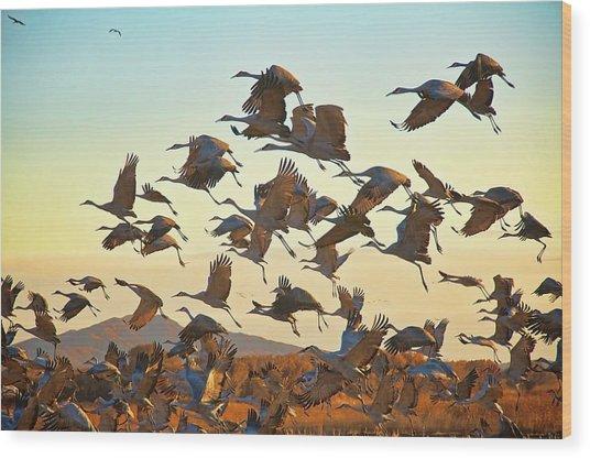 Liftoff, Sandhill Cranes Wood Print
