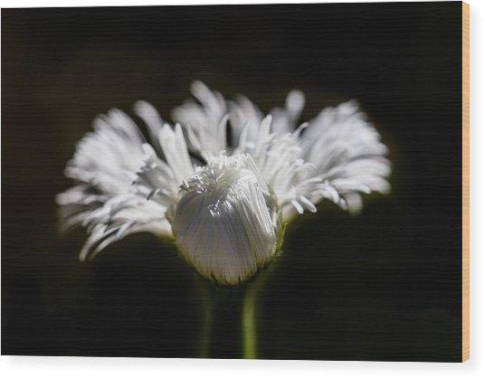Floral Chiaroscuro Wood Print