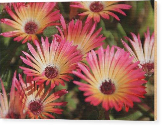 Floral Expectancy Wood Print