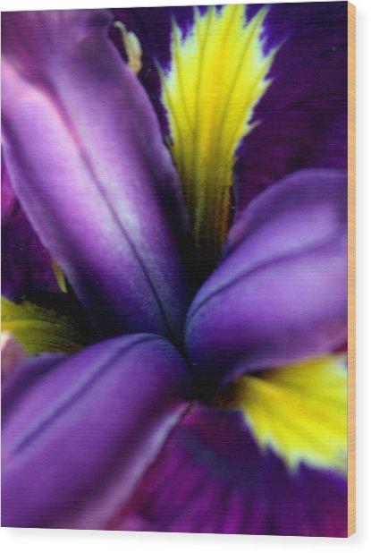 Floral Explosion Wood Print by Alexandra Harrell
