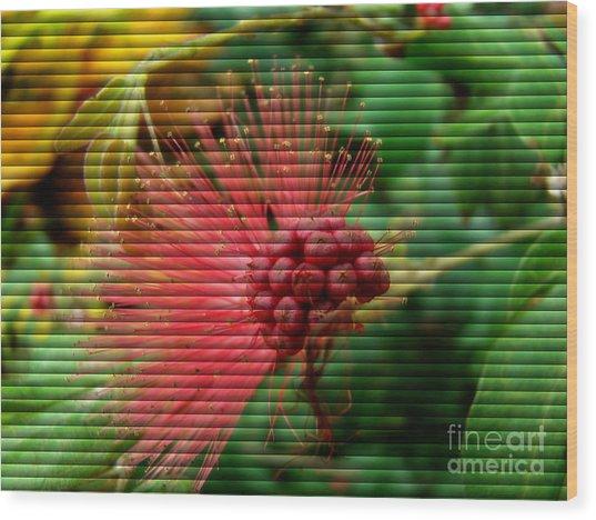Floral Fan Wood Print