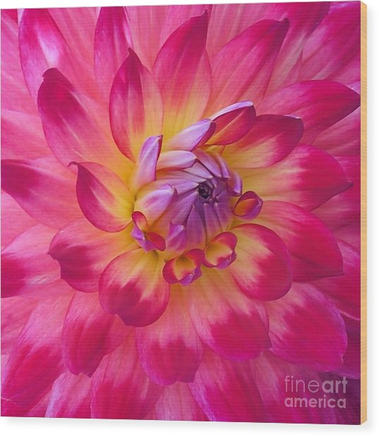 Floral Fantasia Wood Print