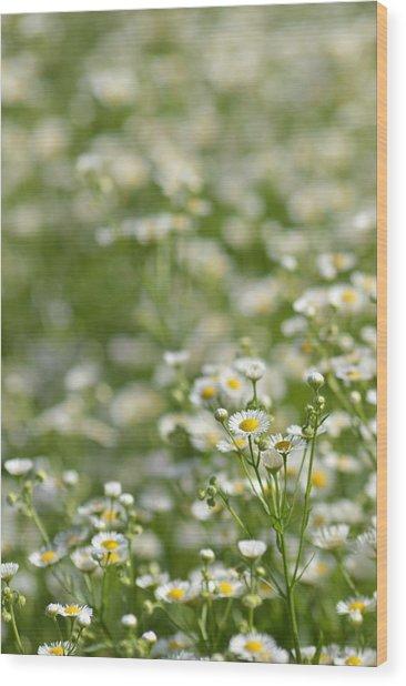 Floral Field #1 Wood Print