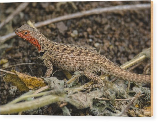 Floreana Lava Lizard Wood Print by Harry Strharsky
