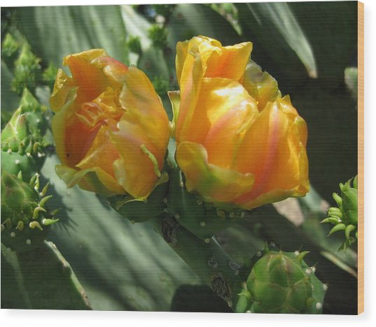 Flores De Cactus Wood Print by Diana Moya
