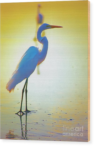 Florida Atlantic Beach Ocean Birds  Wood Print