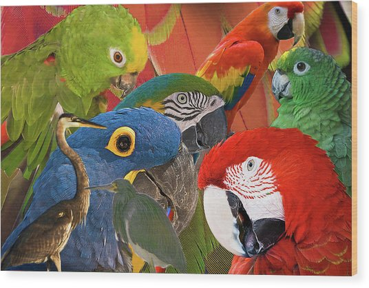 Florida Birds Wood Print