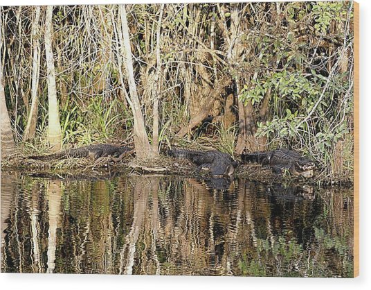 Florida Gators - Everglades Swamp Wood Print