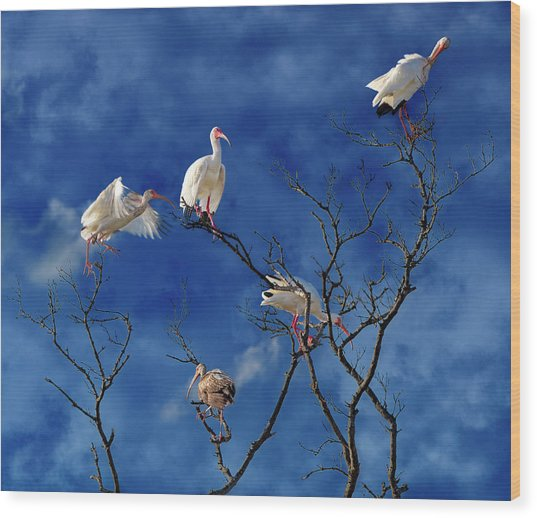Florida Keys The Exaggerated Ibis Wood Print
