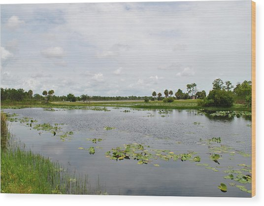 Florida Landscape Wood Print by Steven Scott